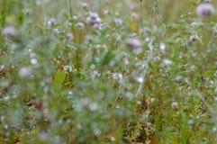 flores del verano en fondo verde Imágenes de archivo libres de regalías
