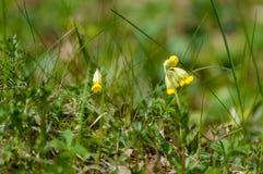 flores del verano en fondo verde Foto de archivo