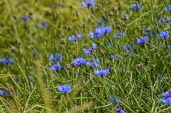flores del verano en fondo verde Imagen de archivo