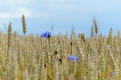 flores del verano en fondo verde Imagen de archivo libre de regalías
