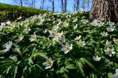 flores del verano en fondo verde Foto de archivo libre de regalías
