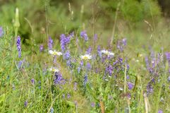flores del verano en fondo verde Fotografía de archivo