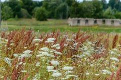 flores del verano en fondo verde Fotos de archivo libres de regalías