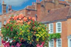 Flores del verano en la calle del castillo, Farnham Fotografía de archivo libre de regalías