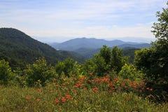 Flores del verano en las montañas imagen de archivo
