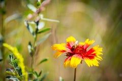 Flores del verano en prado Imagen de archivo