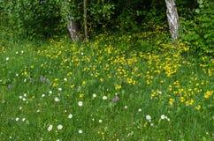 Flores del verano en un área de la hierba verde Imágenes de archivo libres de regalías