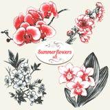 Flores del verano fijadas Imágenes de archivo libres de regalías