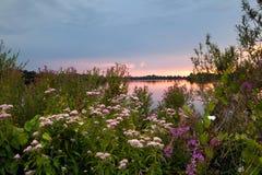 Flores del verano por el lago en la puesta del sol Fotografía de archivo