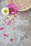 Flores del Zinnia en un fondo de madera Imágenes de archivo libres de regalías