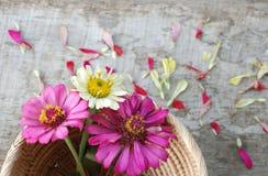 Flores del Zinnia en un fondo de madera Fotografía de archivo