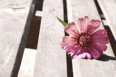 Flores del Zinnia en un fondo de madera Imagen de archivo