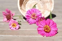 Flores del Zinnia en un fondo de madera Fotos de archivo