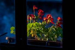 Flores delante de la ventana fotos de archivo