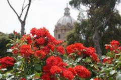 Flores delante de las ruinas romanas Fotografía de archivo libre de regalías