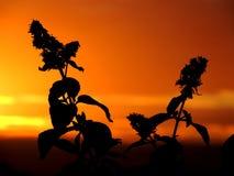 Flores delante de una puesta del sol hermosa Imagen de archivo