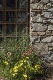 Flores delante del edificio histórico Imagenes de archivo