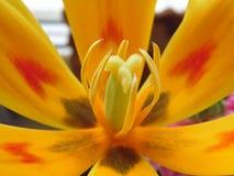 Flores delicadas fotografía de archivo