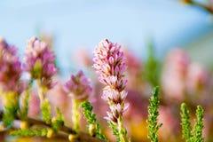 Flores delicadas Fotos de Stock Royalty Free