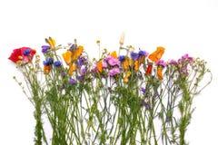 Flores delicadas Amarillo de la primavera, púrpura, flores rosadas en el fondo blanco Foto de archivo