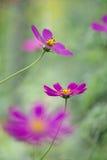Flores delicadas del espacio Pasteles delicados Foco selectivo Foto de archivo