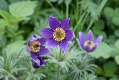 Flores delicadas del jardín fotografía de archivo