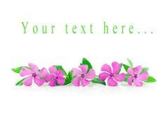Flores delicadas em um fundo branco Imagens de Stock Royalty Free