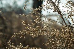 Flores desgrenhados pequenas em um arbusto selvagem imagem de stock royalty free