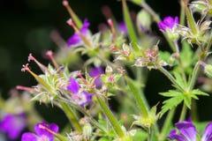 Flores desvanecidas Fotografia de Stock Royalty Free