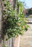 Flores detrás de una cerca Fotos de archivo libres de regalías