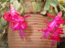 Flores dezembro Imagens de Stock