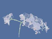 Flores dibujadas mano coloreadas de la orquídea de la primavera Imágenes de archivo libres de regalías