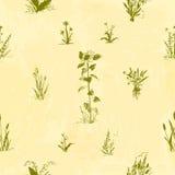 Flores dibujadas mano del garabato Modelo inconsútil floral Esquema verde, fondo pintado acuarela amarillo claro Fotografía de archivo libre de regalías