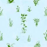 Flores dibujadas mano del garabato Modelo inconsútil floral Esquema verde, fondo pintado acuarela azul claro Fotografía de archivo libre de regalías