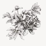 Flores dibujadas tinta de la peonía Foto de archivo libre de regalías