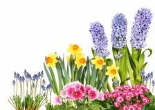 Flores diferentes da mola foto de stock royalty free