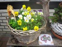 Flores Diseño del jardín Foto de archivo libre de regalías