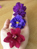 Flores a disposición Fotos de archivo libres de regalías