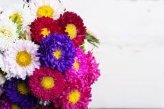 Flores do áster Imagens de Stock
