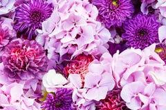 Flores do áster e da hortênsia O rosa bonito floresce o fundo Fotografia de Stock