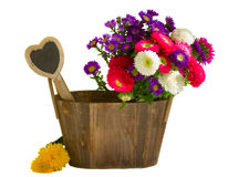 Flores do áster no potenciômetro de madeira Imagens de Stock Royalty Free
