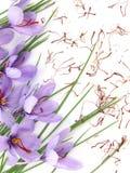 Flores do aç6frão Imagem de Stock