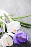 Flores do açafrão da mola Fotografia de Stock Royalty Free