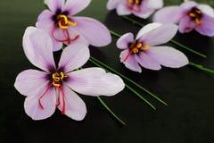 Flores do açafrão de aç6frão Imagens de Stock