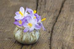 Flores do açafrão - flores frescas da mola Imagens de Stock Royalty Free