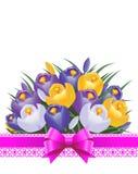 Flores do açafrão na luz do sol da primavera Fita e curva Foto de Stock Royalty Free
