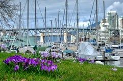 Flores do açafrão no jardim da cidade na mola Imagem de Stock Royalty Free