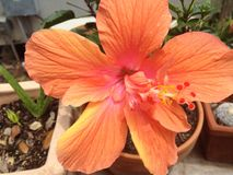 Flores do amor Fotografia de Stock Royalty Free