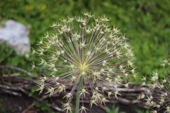 Flores do arboreto Imagens de Stock