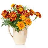 Flores do arbusto do açafrão (Tagetes) - usado como uma especiaria e uma planta medicinal no jarro cerâmico Imagem de Stock Royalty Free
